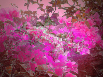 Spring Time - Free image #276251