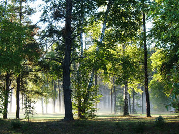 Morning Fog - image #276301 gratis