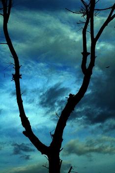 Sky Shop - image gratuit #276531