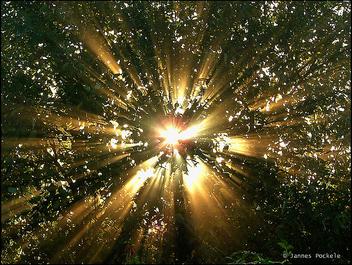 De zon door de bomen - image #276661 gratis