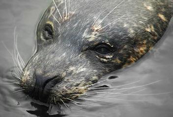 Seal - Free image #276761