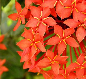 Flower parade - Free image #276951