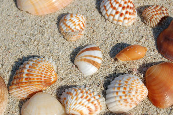 Sea shells 1 - Free image #277111