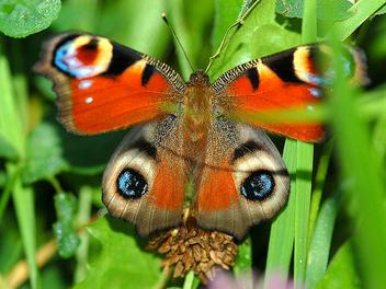 2 great eyes - image #277251 gratis