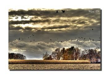 Birds - бесплатный image #277671