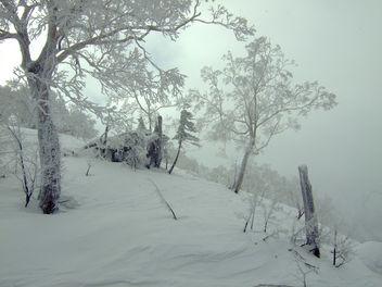 Winter Scene - Free image #278081