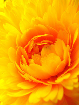 Yellow and Orange - image #278461 gratis