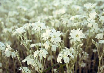 Vintage flowers - Free image #278511