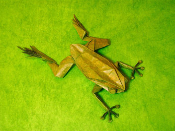 tree frog - Free image #278861