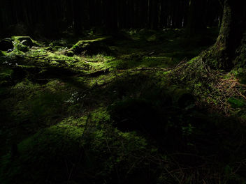 Forest Floor - image #278911 gratis