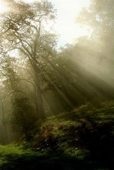 Sun Rays - image gratuit #279221