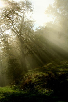 Sun Rays - Free image #279221