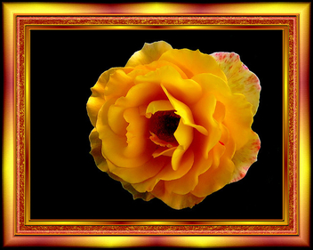 yellow rose - image #279361 gratis