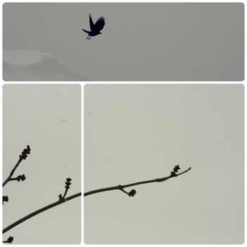 bird and branch - image gratuit #279381
