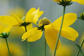 Blumen im Wind - image #279761 gratis