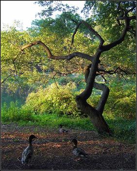 Central Park Bird Talk