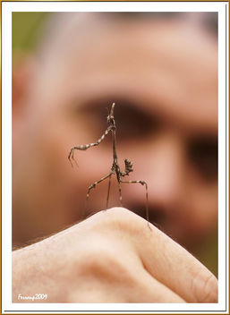 Empusa pennata - Mantis palo - Cone-Head mantis - Kostenloses image #280521