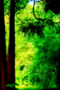 Forest glow - image #280651 gratis