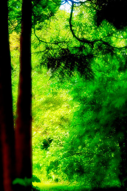 Forest glow - Free image #280651