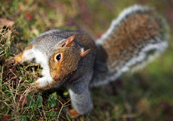 SQUIRREL!! - image gratuit #280691