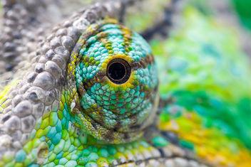 Chameleon's eye - Free image #281191