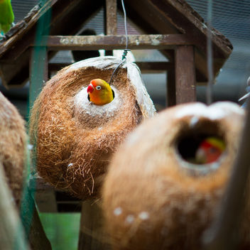 Coconut Bird House / SML.20110202.7D.07198 - image #281311 gratis