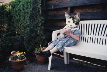 Garden cat - Free image #281401