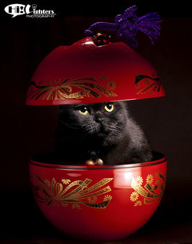 Happy Chinese New Year 2013 - Free image #281691