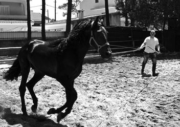 Black horse training - image #281881 gratis