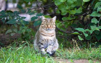 Street cat - Free image #282081
