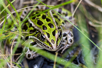 Frog - Kostenloses image #282941