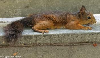 Cutie squirrel - Kostenloses image #283121