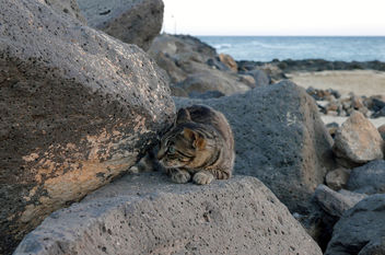 Beach Cat - image gratuit #283131