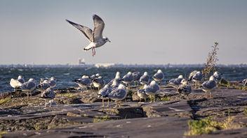Flock - Kostenloses image #283321