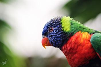 Planckendael - Bird - Free image #283371