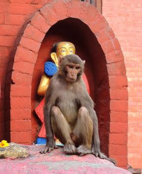Kathmandu-A monkey resting at Monkey Temple - бесплатный image #283661