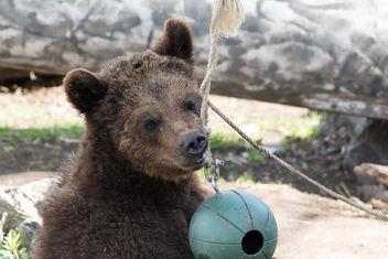 brown bear-9815 - image gratuit #283691