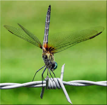 Dragon fly by wire - Free image #284281