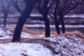 Winter - image gratuit #284721