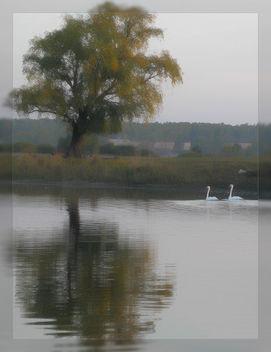 swan - Kostenloses image #284811