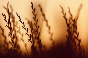 Sunset - Kostenloses image #285261