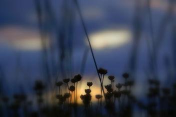 light studious - Free image #285291