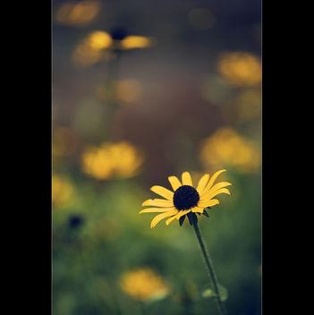 a vivid beauty... | Explored - Free image #285431