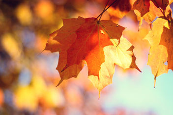 Autumn is here! - image #285501 gratis