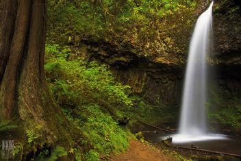 Upper Latourell Falls - image gratuit #285521