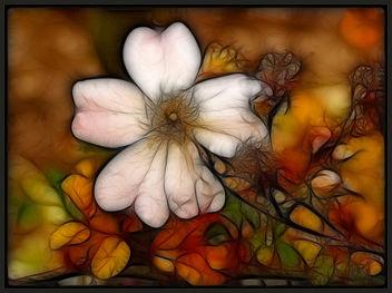 Autumn - Free image #285561