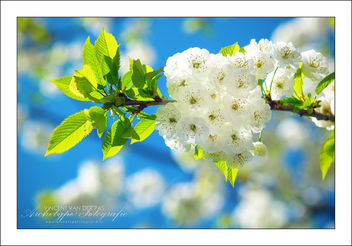 Bright Blossom - image #286441 gratis