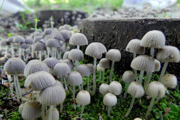 Magic Mushrooms - Kostenloses image #286491