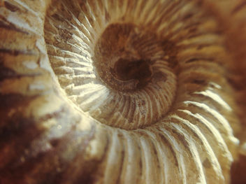 Fossil Sitting In Sun Light - Free image #286681