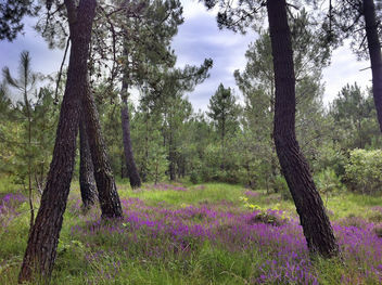 French Forest In The Summer - image #286851 gratis
